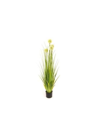 Mikasa Moor Kuru Çiçek Yeşil